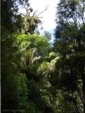 The bush