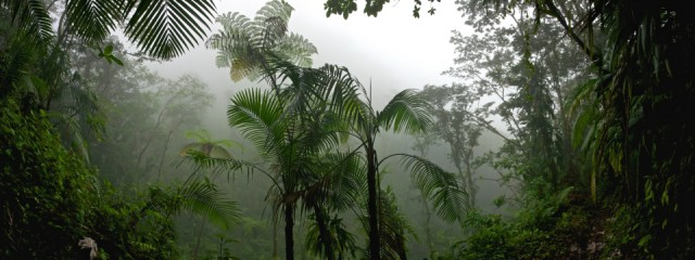 tropical_monsoon